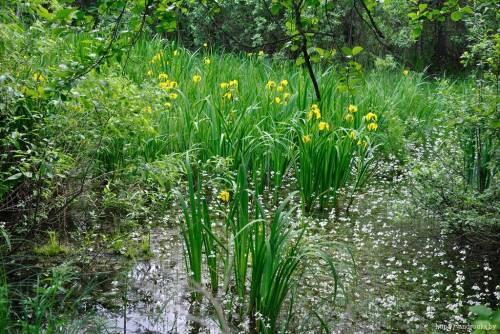 Национальный парк припятский представляет собой государственное природоохранное учреждение